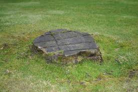 An image showing a stump in the garden.